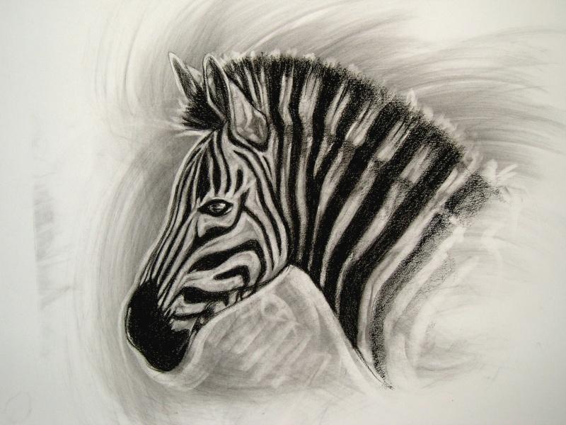 Autre gros plan d 39 l phant - Zebre a dessiner ...