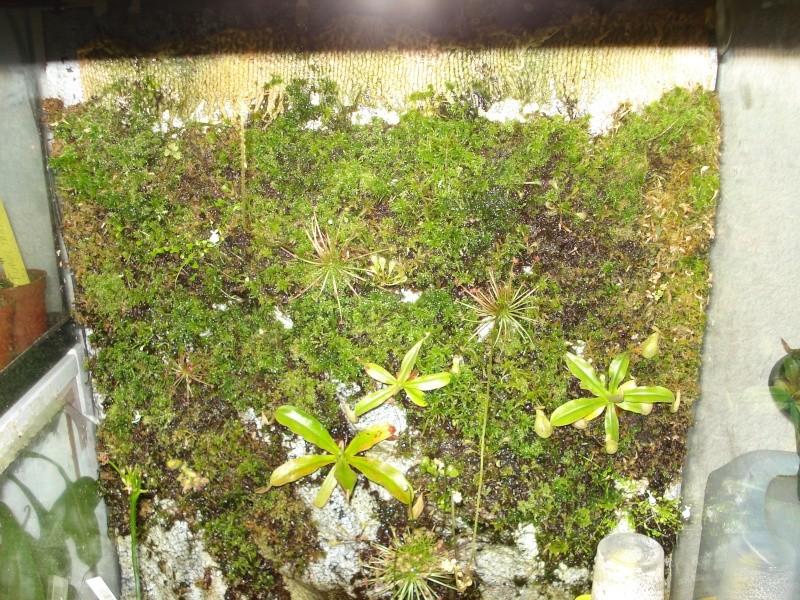 sphaigne terrarium