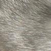 rat au poil bleu US, gris