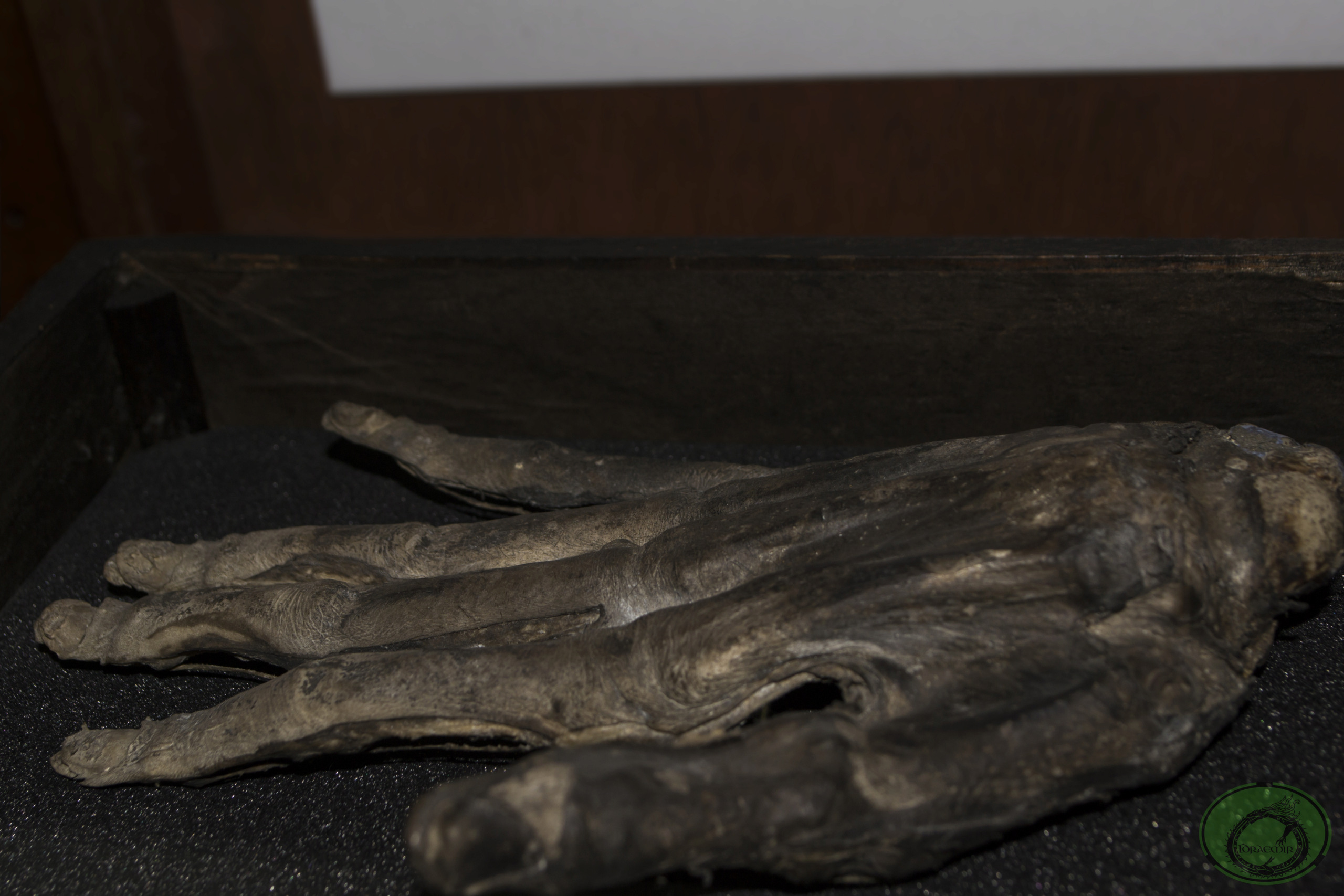 Whitby's Hand of Glory