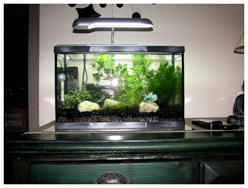 Nouvel aquarium pour betta for Aquarium poisson rouge sans pompe