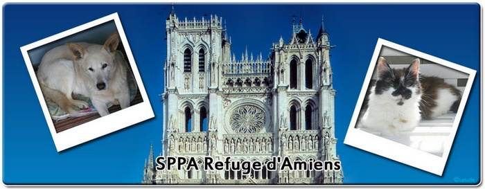 SPPA Refuge d'Amiens