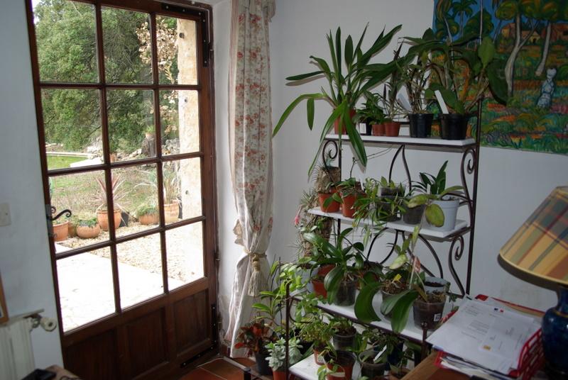 Le forum des plantes d 39 appartement d 39 int rieur nos plantes for Grande plante appartement