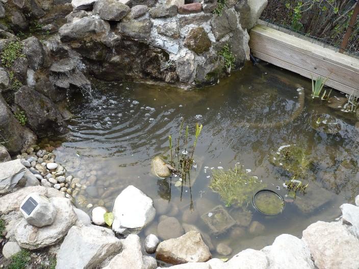 Nature bassin la mare et le bassin de jardin naturel afficher le sujet eau pas nette for Fontaine de jardin nature et decouverte