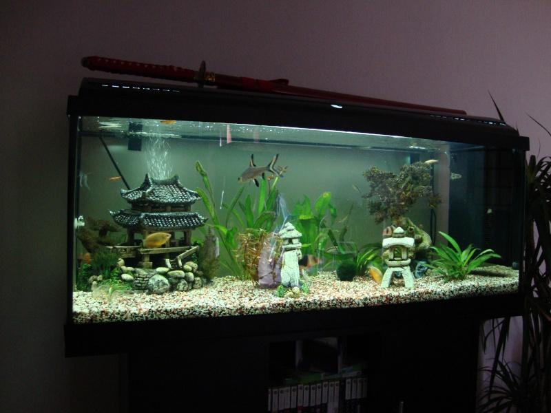 Mon 160 litres et sa population for Aquarium 40 litres poisson rouge