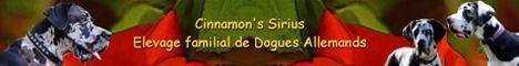 banner of the great danes breedingCinnamon\'s Sirius
