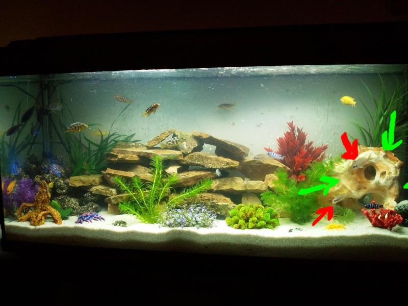 les photos de nos aquariums page 7 cr 233 ation d aquarium eau douce aqua