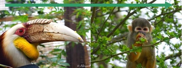 La londe les maures 2011 changement de nom et nouveaux am nagements - Jardin des oiseaux la londe ...
