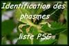 Identification des phasmes