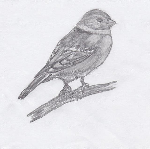 Dessin oiseau souris kore - Un oiseau dessin ...