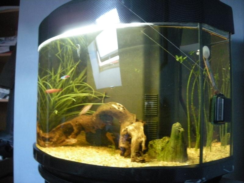 Aquarium Eau Douce Ou Salee
