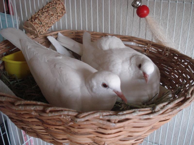 birdie10.jpg