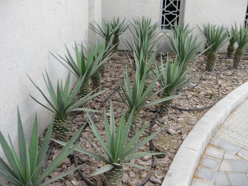 jardin de succulentes et photo de plantes. Black Bedroom Furniture Sets. Home Design Ideas