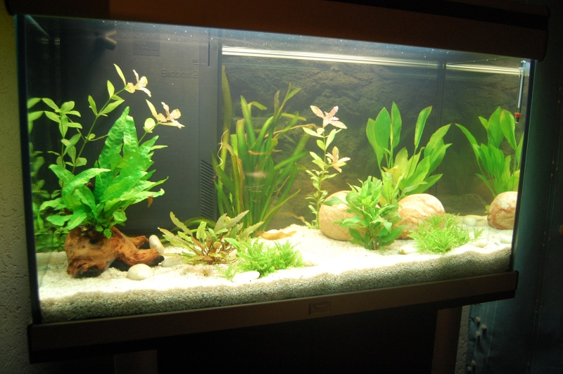Lancement d 39 un aquarium archi d butant for Terreau aquarium