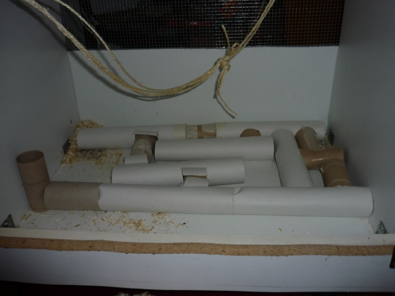 maison pour rat fabriquer ventana blog. Black Bedroom Furniture Sets. Home Design Ideas