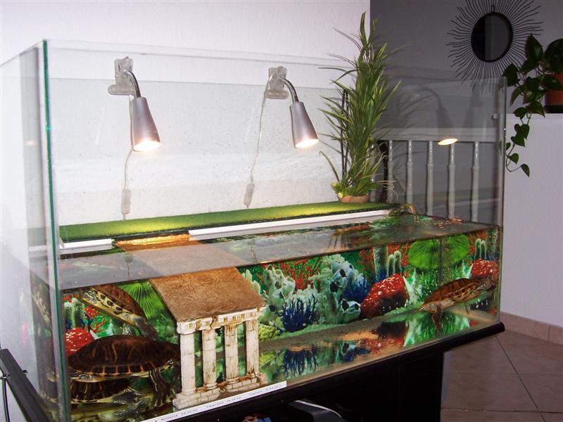 décor d aquarium pour tortue