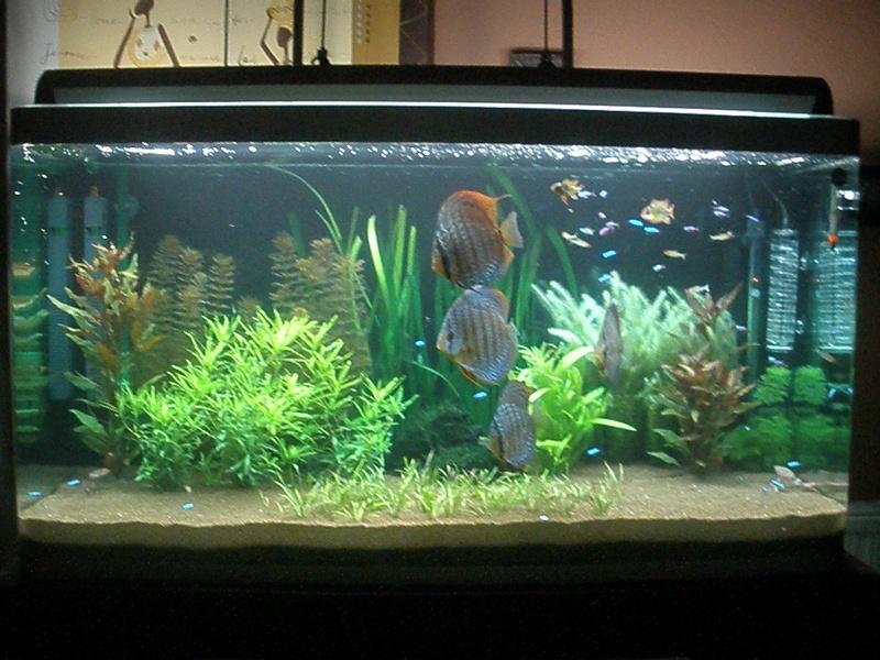 Aquarium Eau Douce Communautaire