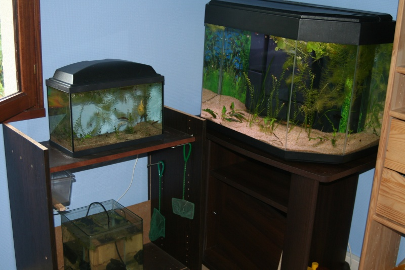 mes aquariums. Black Bedroom Furniture Sets. Home Design Ideas