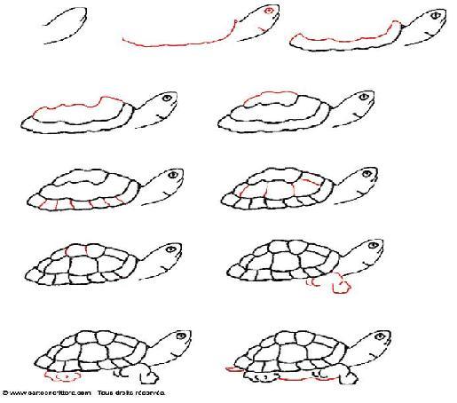 Comment dessiner une tortue - Comment dessiner une tortue ...